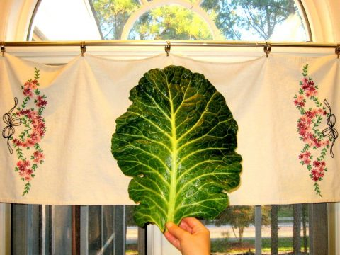 Collard Green Leaf