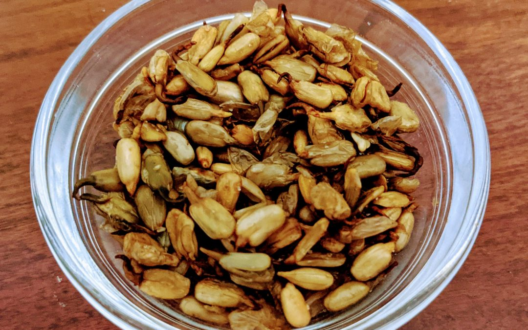 Sprouting and Roasting Sunflower Seeds