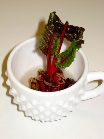 Regrow Swiss Chard